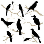 Birds silhouette set. Vector. — Stock Vector