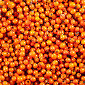 Orange berries background — Stock Photo