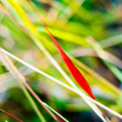 Grass colors in autumn. nature background. — Stock Photo #33342407
