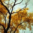 Stock Photo: Autumn trees background.
