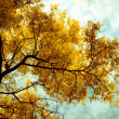 Autumn trees background. — Foto Stock