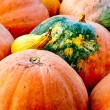 Seasonal Pumpkin Background — Stock Photo #33342499