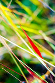 Grass colors in autumn. nature background. — Stock Photo