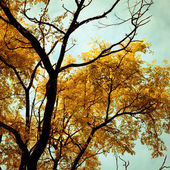 Autumn trees background. — Stock Photo