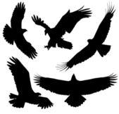 Eagle Silhouette — Stock Vector