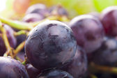 Wet Black Grapes — Stock Photo