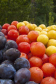 Plums background — Stock Photo