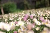Wiese mit frühlingsblumen — Stockfoto