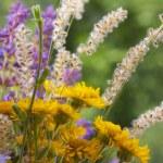 Beautiful wild flowers — Stock Photo #28287871