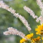 Beautiful wild flowers — Stock Photo #28288041