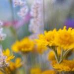 Beautiful wild flowers — Stock Photo #28288413