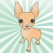 Pinscher — Stock Photo