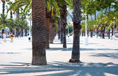 La fila de palmeras. — Foto de Stock