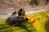 Bear at the Barcelona Zoo. — Stock Photo