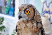 An owl in Friguia Animal Park. Hammamet,Tunisia. — Stock Photo