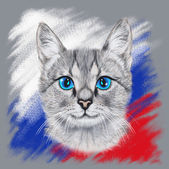 Gray cat colors — Stock Photo