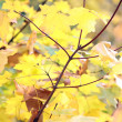 Automn leaf - Stock Photo