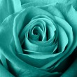 Blue rose — Stock Photo #14195045