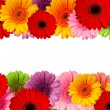 Bouquet of gerbera flowers isolated on white background — Stock Photo