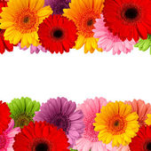 Bouquet of gerbera flowers isolated on white background — Foto Stock
