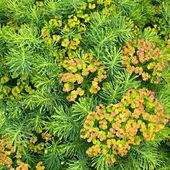 Plantes de fond — Photo