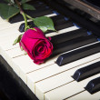 Rose on a piano — Stock Photo