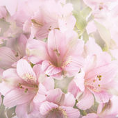 Beautiful flowers made with color filters — Foto Stock