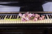 Orchid on a piano — Stockfoto