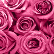 Roses background — Stock Photo #25216609