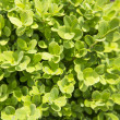 Plant background — Stock Photo