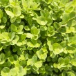 Stock Photo: Plant background