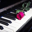 Romantic concept - deep red rose on piano keys — Stockfoto