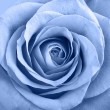 Blue rose — Stock Photo #30177335