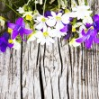Wood background with flowers. — Stock Photo
