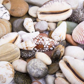 Sea shells stones frame — Stock Photo