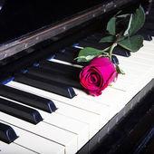ピアノのキーに深い赤いバラのロマンチックな概念 — ストック写真
