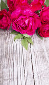Wood Background with Roses — Stock Photo