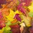 Colorful and bright background made of fallen autumn leaves — ストック写真