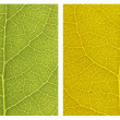 Photo: Different color  texture leaf