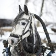 Stock Photo: Horse-drawn sleigh