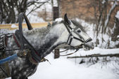 Horse-drawn sleigh — Stock Photo