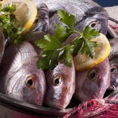 Sea bass — Stock Photo