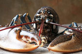 Lobster — Stockfoto