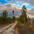Siberian taiga — Stock Photo