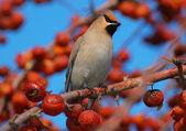 Vogel in een prachtige tuin — Stockfoto