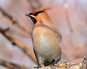 Bird in a beautiful garden — Stock Photo