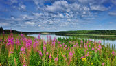 Irtysh River — Stock Photo