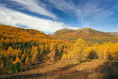 Forests and mountains — Stock Photo