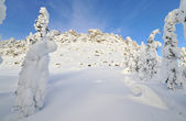 Winter mountains — Stock Photo