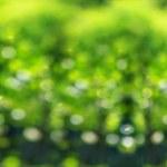 Beautiful green bokeh. Spring background. — Stock Photo #38728963